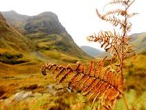 Пейзаж Шотландии Стоковое фото RF