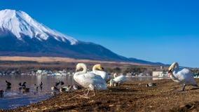 Пейзаж Япония Mount Fuji озера лебед стоковая фотография rf