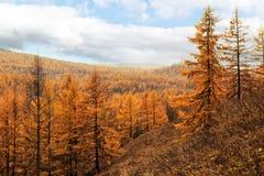 Пейзаж Arshaan Стоковая Фотография RF