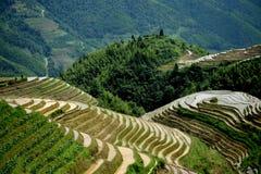 Пейзаж Yangshuo Стоковые Изображения