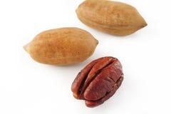 пекан иллюстрации предпосылки nuts безшовный Стоковые Изображения RF