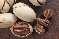 пекан иллюстрации предпосылки nuts безшовный Стоковое Изображение RF