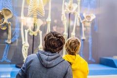 Пекин, Китай, 16-ое октября 2018: Папа и сын наблюдают скелеты старых и современных людей Людское развитие стоковые изображения