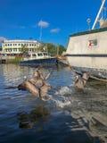 Пеликаны в заболоченном рукаве реки стоковые фото