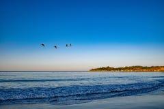 Пеликаны Грейс небеса стоковые изображения rf