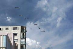 Пеликаны летая над портовым районом гуляют на пляже Dania стоковые изображения rf