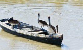 Пеликаны на маленькой лодке стоковые изображения rf