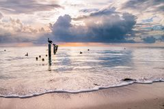 Пеликаны отдыхая на деревянных штендерах зачаливания над спокойной Вест-Индией s стоковое изображение rf