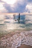 Пеликаны отдыхая на деревянных штендерах зачаливания над спокойной Вест-Индией s стоковое изображение