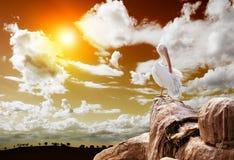 пеликан ландшафта Стоковые Фото