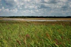 Пеликан на озере, летний день Стоковое Изображение