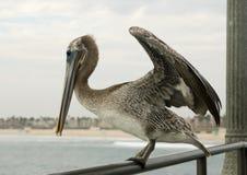 пеликан поручня Стоковые Фото