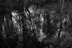 Поток весны стоковые изображения rf