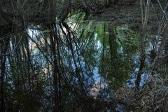 Поток весны стоковое фото rf