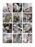 Пенит весны Стоковые Изображения RF