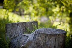 Пень весны Стоковая Фотография RF