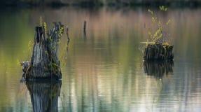 Пень в воде Стоковые Изображения