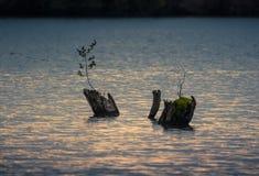 Пень в воде Стоковое Изображение RF