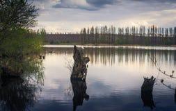 Пень в воде Стоковая Фотография RF