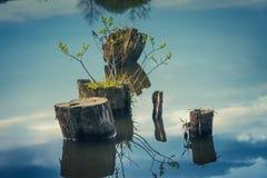 Пень в воде Стоковые Фотографии RF