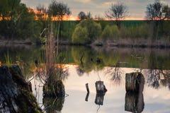Пень в воде Стоковая Фотография
