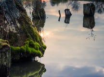Пень в воде Стоковое фото RF
