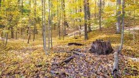 Пень в лесе падения Стоковое Изображение RF