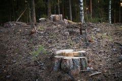 Пень в обезлесении леса, разрушение леса Проблема экологичности стоковые фотографии rf