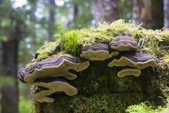 Пень в дождевом лесе. Стоковые Фото