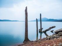 Пень в озере Стоковые Фото
