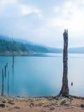 Пень в озере Стоковые Изображения RF