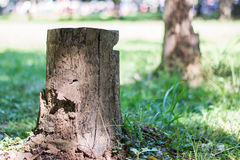 Пень в парке стоковое изображение