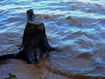 Пень в реке Стоковые Фотографии RF