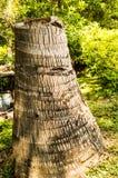 Пень в саде Стоковые Изображения RF