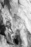Пень в черно-белом Стоковое Изображение RF