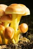 пень грибов Стоковое Изображение RF