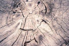 Пень дерева в лесе лета Стоковое Изображение RF