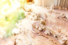 Пень дерева в лесе лета Стоковые Фотографии RF