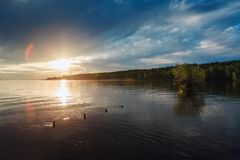 Пень дерева в озере и золотом свете захода солнца Стоковые Изображения RF