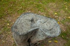 Пень дерева в парке Стоковые Фото