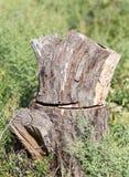 Пень дерева в природе Стоковая Фотография