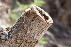 Пень дерева в природе Стоковые Фотографии RF