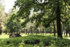Пень дерева в ярком и зеленом coniferous лесе стоковое фото