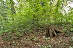 Пень дерева на зеленой траве в горе Стоковое Изображение RF