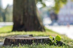 Пень дерева на зеленой траве в городе Стоковое Фото