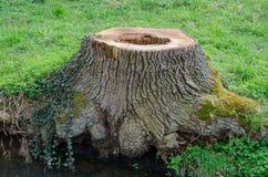 Пень дерева с отверстием Стоковая Фотография RF