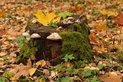 Пень дерева Стоковая Фотография RF