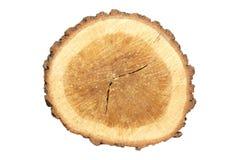 пень деревянный Стоковые Изображения