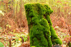 Пень дерева в лесе под мхом Стоковая Фотография