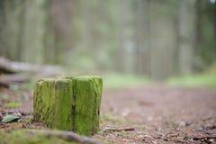 Пень дерева в лесе Стоковые Изображения